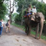 The Overuse and Abuse of Elephants: The Past, Present, and Future for Asian Elephant Populations